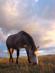 horsesmall