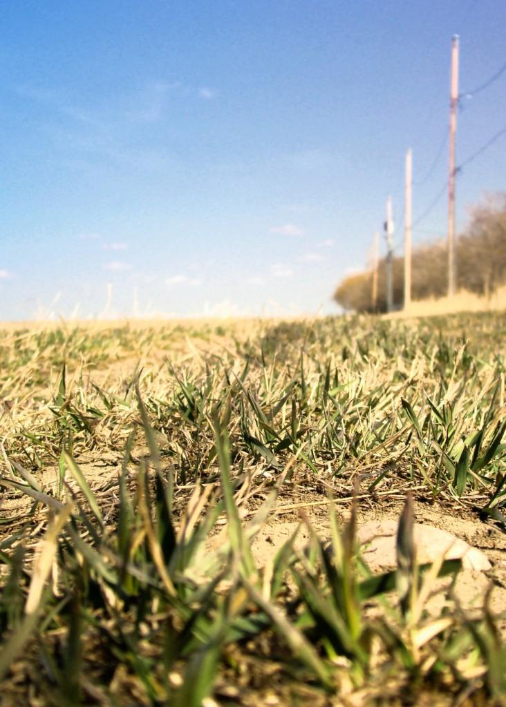 prairie-dust-small